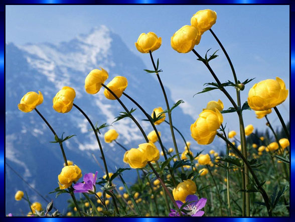 http://beautiful-all.narod.ru/picture.jpg